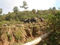 Start in Nepal